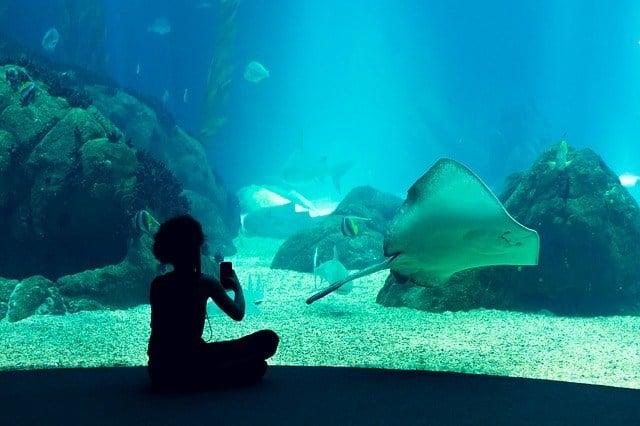 gdzie na pierwszą randkę oceanarium